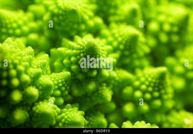 Romanesco cauliflower. head of aromanesco cauliflower - Stock Image