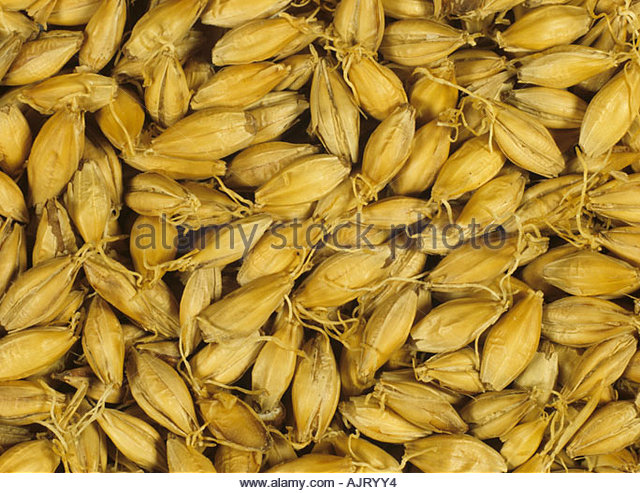 the germination of barley seeds using In this study, the influence of ultrasonic stimulation was investigated on the  germination of barley and alpha-amylase activity grains in the dry.