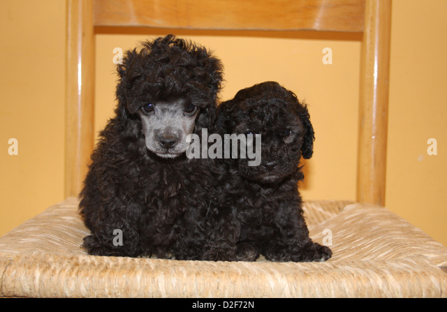 2 Dogs Chair Stock Photos & 2 Dogs Chair Stock Images - Alamy