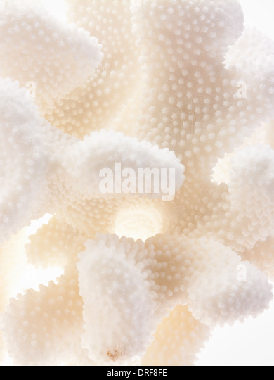 Maryland USA Still life small delicate textured objects - Stock Image