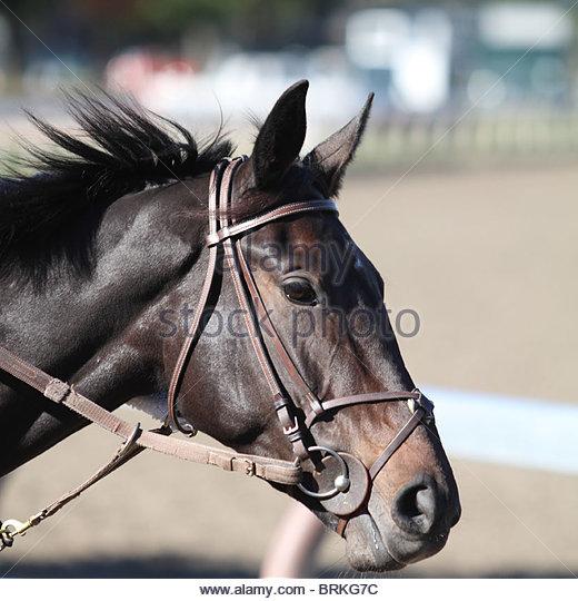 Horse Head Profile - Stock Image