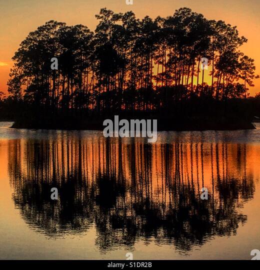 Sunset behind trees in the Everglades - Stock-Bilder