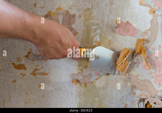 Wallpaper being scraped off with a putty knife, Stuttgart, Baden-Wuerttemberg - Stock Image
