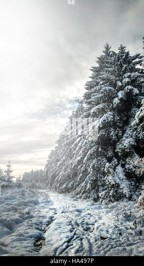 amazing misty magical winter landscape in forest - Stock Image