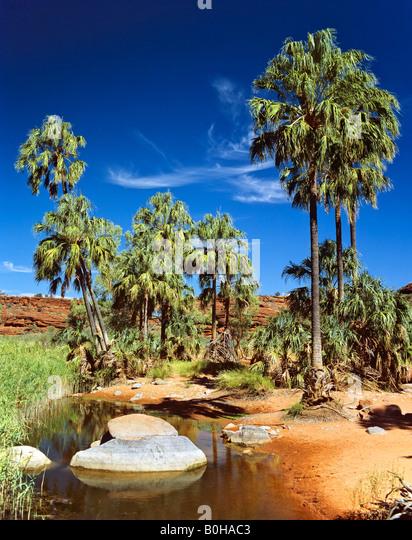 Palm Valley, Alice Springs, Northern Territory, Australia - Stock-Bilder