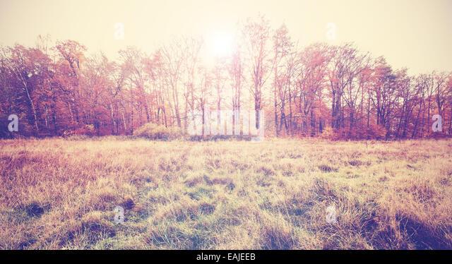 Vintage filtered photo of an autumn field. - Stock-Bilder