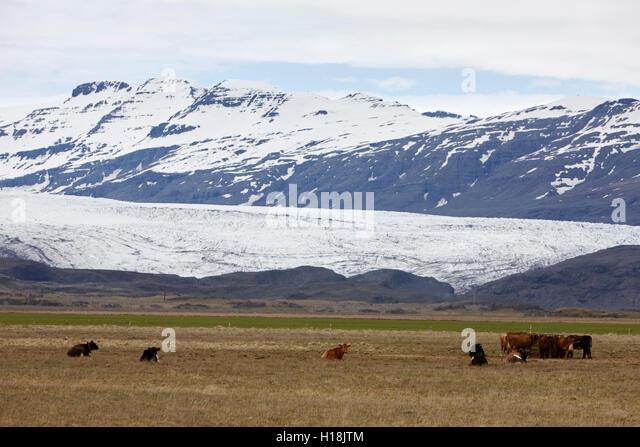 fertile farmland in area of retreat of Breiðamerkurjökull  glacier vatjanokull Iceland - Stock Image