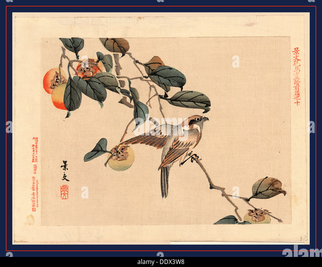 Zenpen no ju, Page ten. 1892., 1 print : woodcut, color ; 20.9 x 27.3 cm., Print shows a bird perched on a branch - Stock Image