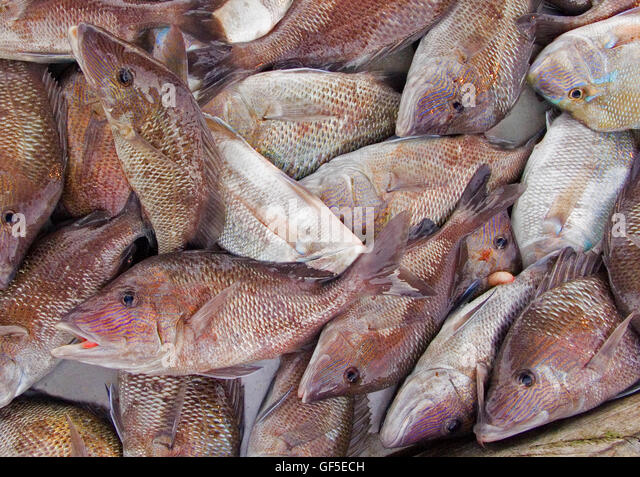Florida fish boat stock photos florida fish boat stock for City fish market fort myers