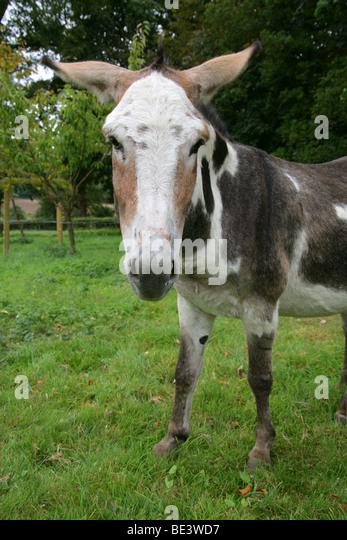 Female horse ass - photo#19