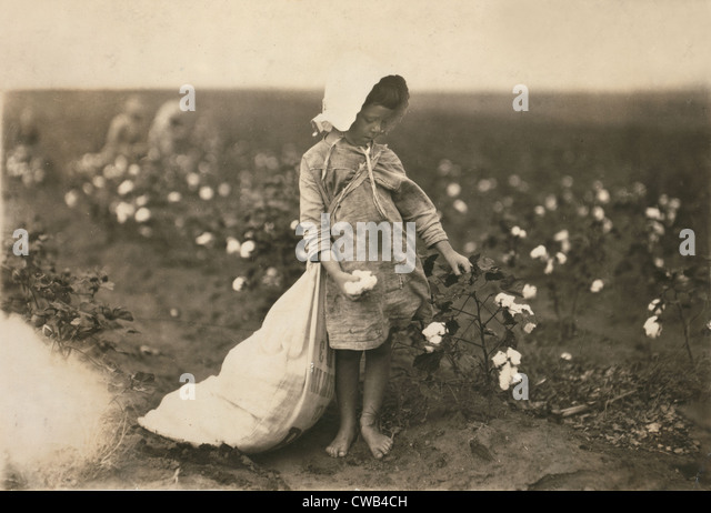 Child labor, a young girl picking cotton, Vera Hill, 5 years old picks 25 pounds a day, Comanche County, Oklahoma, - Stock Image