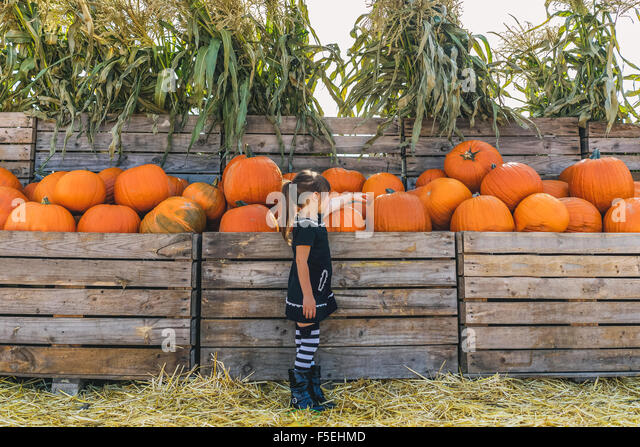Girl picking out pumpkins at pumpkin farm - Stock Image