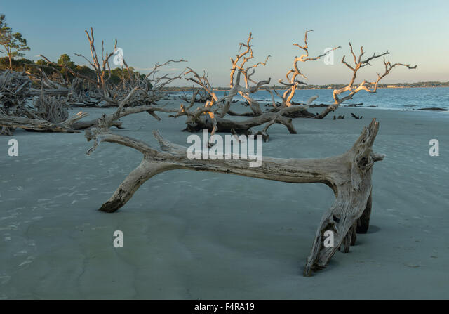 La Reserva Federal, la criatura de Jekyll Island I
