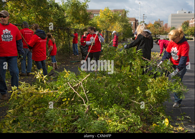 how to clear a vacant lot