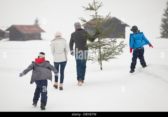 Family carrying fresh Christmas tree in snowy field - Stock-Bilder