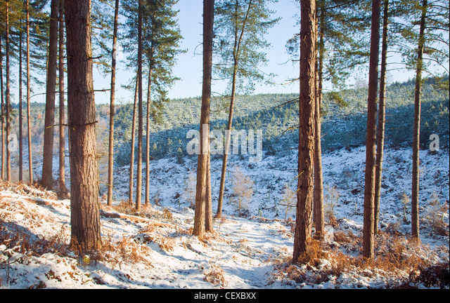 Beautiful winter scenes in and around Abrahams Valley in early winter Cannock Chase AONB (area of outstanding natural - Stock Image