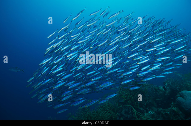 Snit Stock Photos & Snit Stock Images