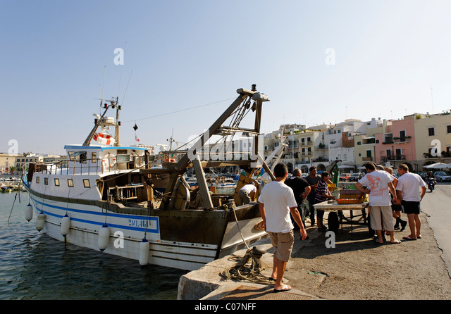 Fishermen with their catch at the port, Trani, Apulia or Puglia, South Italy, Europe - Stock Image