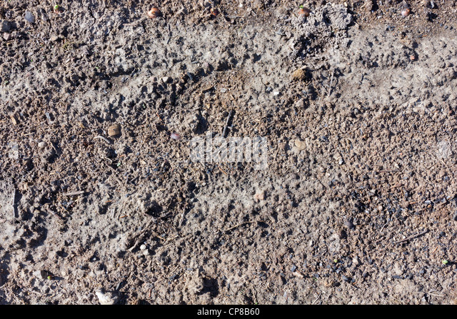 forest land after the fire texture, contains many pieces of coal. Sunny day - Stock Image
