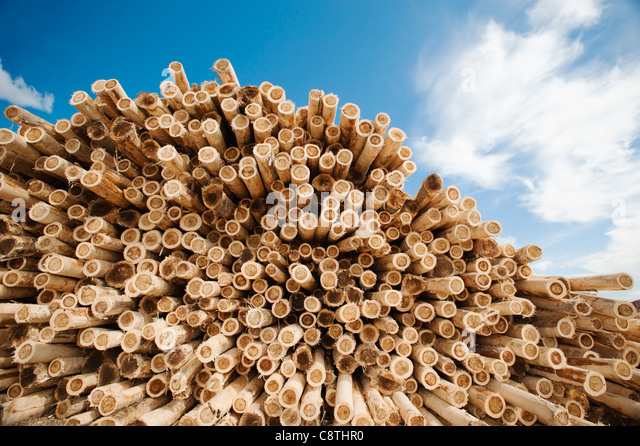 USA, Oregon, Boardman, Stack of timber against blue sky - Stock Image