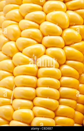 Close-up shot of corn. - Stock Image