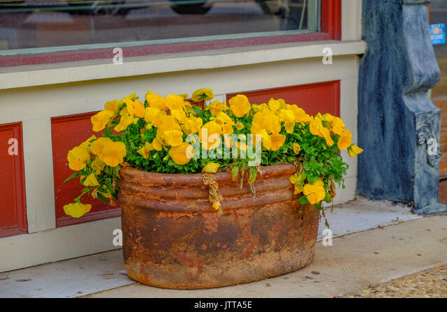 Rusty old large bucket filled with yellow dwarf pansy flowers, sitting in front of a small town store. - Stock Image