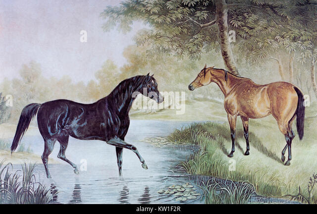 Two horses meeting. From a mid-19th century engraving by J. Harris Jr., 1791-1873 after a painting by G.F. Laporte - Stock Image