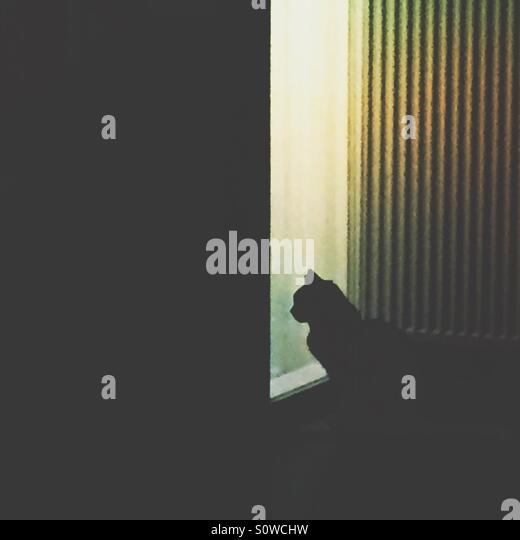 Lonely black cat waiting at a door window - Stock Image