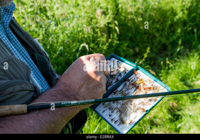 Trout fisherman selecting fly, River Wylye, Wiltshire, England - Stock Image