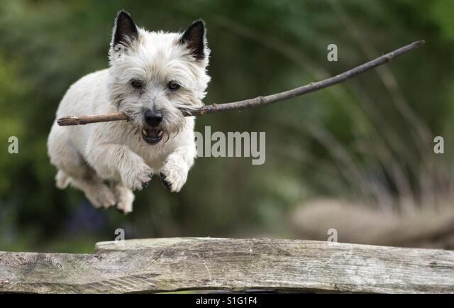 Dog and stick - Stock-Bilder