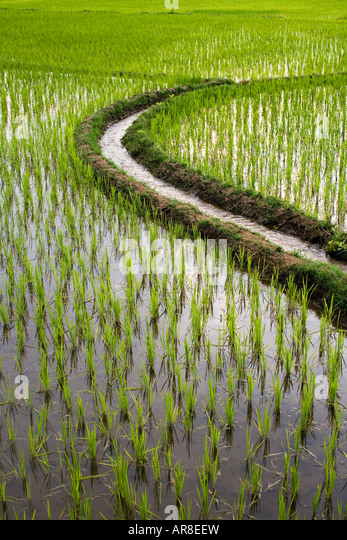 Irrigation water channel through a rice paddy in India - Stock-Bilder