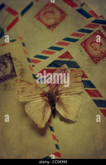 Dry butterfly over old letters - Stock Image
