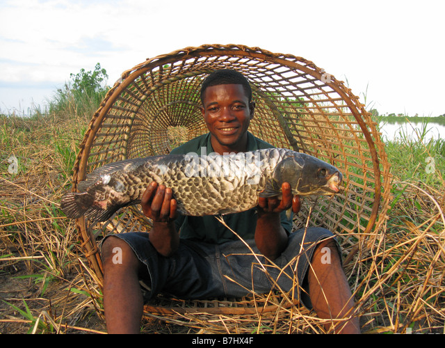 Congolese fisherman in mouth of conical fish trap with large fish on Lower Congo River  Democratic Republic of Congo - Stock-Bilder