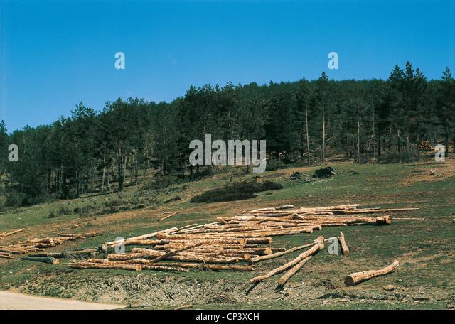 SPAIN ARAGON Sierra de Albarracin DEFORESTATION - Stock Image