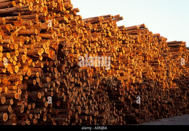 Eucalyptus Crop Stock Photos & Eucalyptus Crop Stock