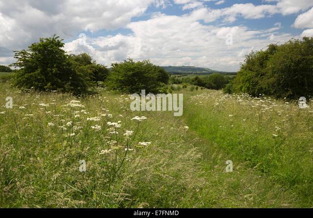 Battle of Evesham (1265) battlefield, Evesham, Worcestershire, England, United Kingdom, Europe - Stock Image