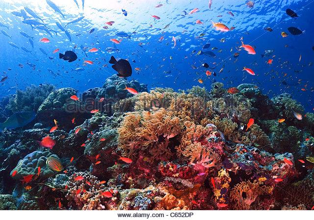 Coral reef Sipadan Malaysia - Stock Image