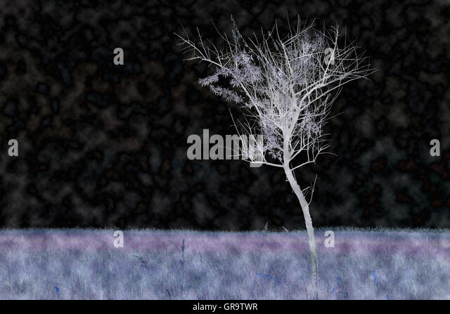 Contrasting Adulterated Oil-Willow On Lake Neusiedl In Burgenland - Stock Image