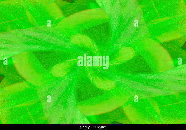 The image of a green florid pattern - Stock Image