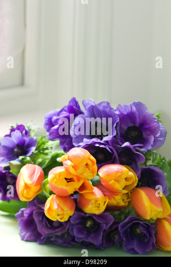 A bunch of orange and purple tulips on a green table by a window sill. - Stock Image