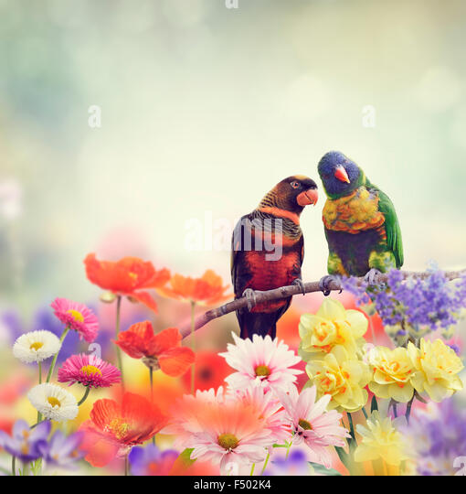 Rainbow Parrots Perch in Flower Garden - Stock Image