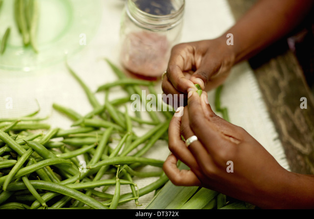 table camping outdoors preparing fresh green beans - Stock Image