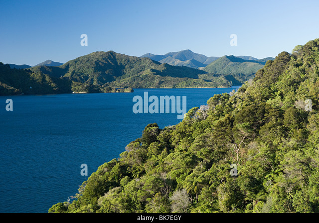 Queen Charlotte Sound, native bush - Stock-Bilder