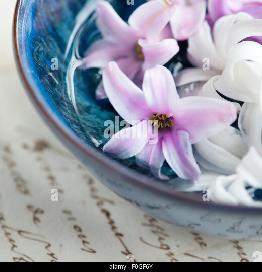 close up of hycinth flower heads floating in a blue bowl - Stock Image