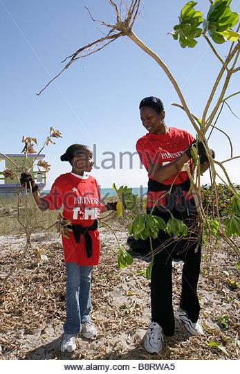 Miami Beach Florida Surfrider Foundation exotic invasive species plant removal Atlantic Ocean public beach sand - Stock Image
