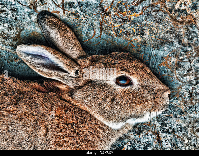 Close up of rabbit's face - Stock Image