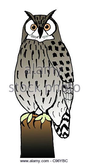 eagle owl drawing illustration illustrations illustrations drawing drawings - Stock Image