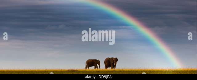Africa,Kenya, View of African elephants in Masai Mara National Park - Stock-Bilder