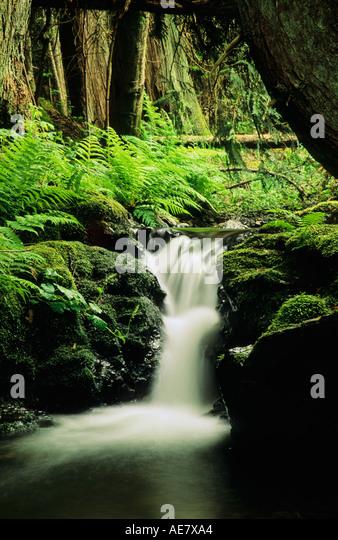 Departure Creek Nanaimo Vancouver Island BC - Stock Image
