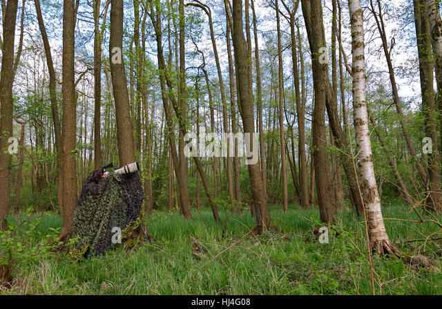 Camouflaged nature photographer in forest, Müritz National Park, Mecklenburg-Western Pomerania, Germany - Stock Image